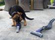 Le Smart Tech 2 en 1 : La révolution avec les animaux